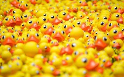 Waarom het niets wordt als je bij de gele badeendjes hoort