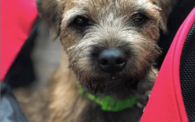 Wat mijn hond je kan leren om mega succesvol te zijn – 4 ijzersterke tips